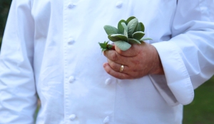 Fresh picked sage, held by chef. Photo by EncinoMom Staff.