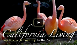 Rotating_Content_Zoo_Tips052013