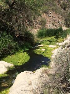 Down stream at Paradise Falls.